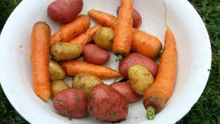 Kartoffeln und Karotten