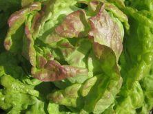 Maikönig Salat