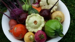 Gemüseabo im September