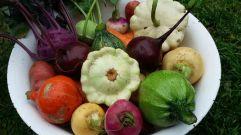 Gemüseauswahl September 2015