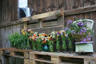 Sommerblumen und Kräuter