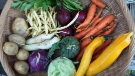 Gemüsevielfalt
