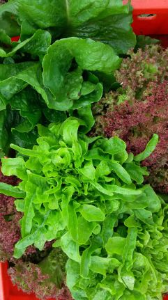 Salat 7