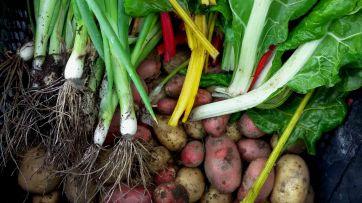 lauchzwiebeln-kartoffeln-und-mangold