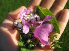 Teepause mit frisch gezupften Blüten udn Kräutern