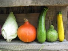 Unser Bio Gemüse