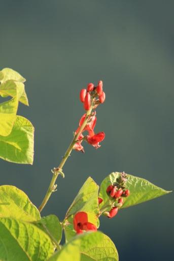 Blüten für Insekten