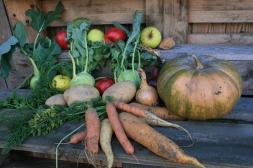 Bio Gemüse im Spätsommer