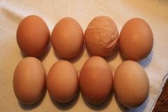 Kein Ei gleicht dem anderen