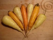 Karottenvielfalt