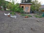 Hühnergehege
