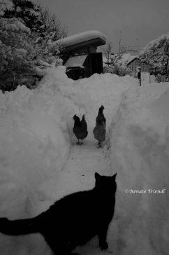 Zusammenkunft im Schnee