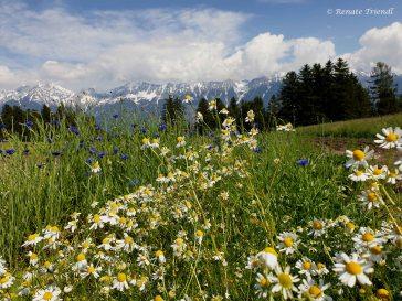 Kräuterfeld im Mai