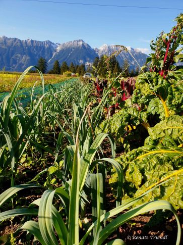 Mischkultur Herbst