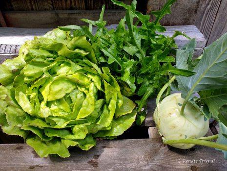 Salate und Kohlrabi