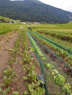 Gemüsefeld Richtung Süden
