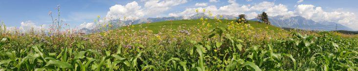 Blühstreifen Bogenweg